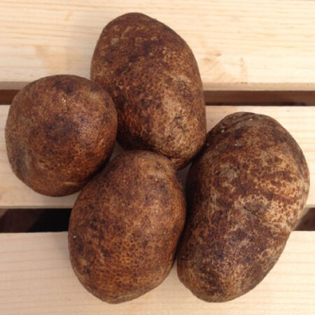 Russet Burbank, Seed Potatoes - 2 Pounds image number null