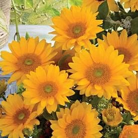 Vincent's Fresh, Sunflower Seeds