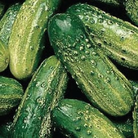 SMR 58, Cucumber Seeds