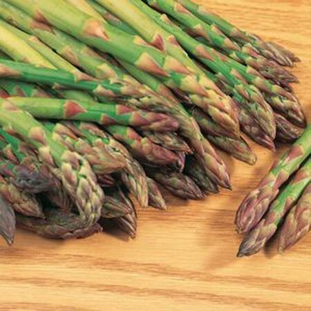 Mary Washington, Asparagus Seeds - Packet image number null
