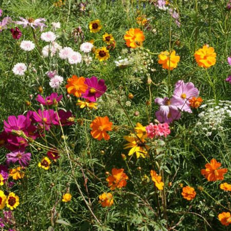 Cutflower Blend, Wildflower Seeds - 1 Ounce image number null