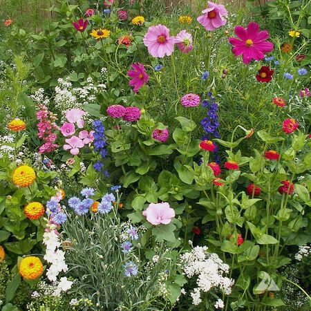 Cottage Garden Blend, Wildflower Seed - 1 Ounce image number null