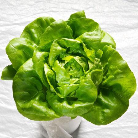 Butter King, Lettuce Seeds - Packet image number null
