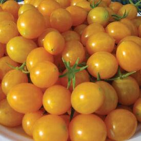 Blondkopfchen, Tomato Seeds