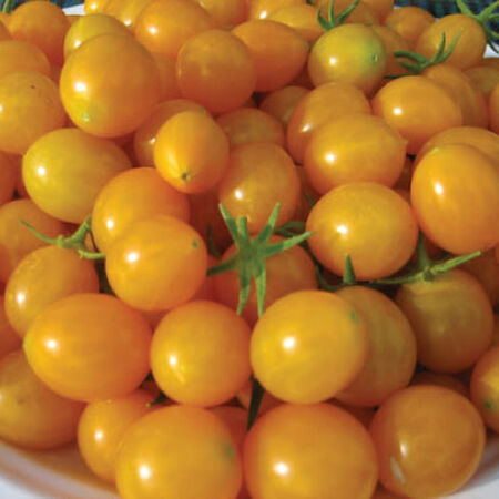 Blondkopfchen, Tomato Seeds - Packet image number null