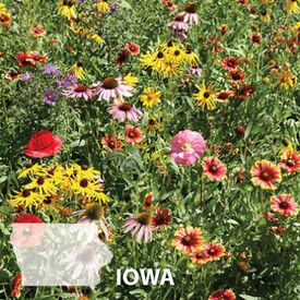 Iowa Blend, Wildflower Seed