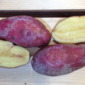 French Fingerling, Seed Potatoes