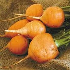 Thumbelina, Carrot Seeds