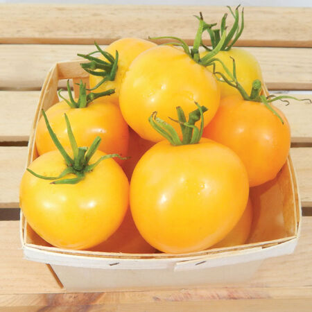 Taxi, Tomato Seeds image number null