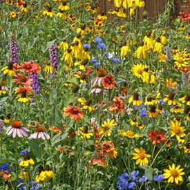 Midwest Blend, Wildflower Seed