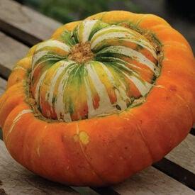 Turk's Turban, Gourd Seeds