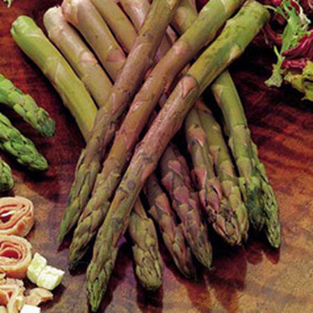 Rosalie, Asparagus Roots - 10 Crowns image number null