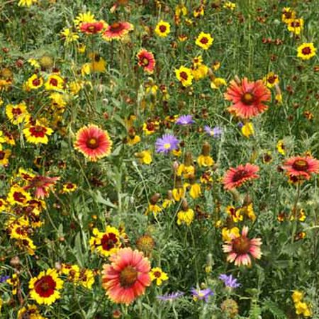 High Plains Native Blend, Wildflower Seed - 1 Ounce image number null