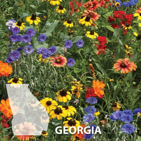 Georgia Blend, Wildflower Seed - 1 Ounce image number null
