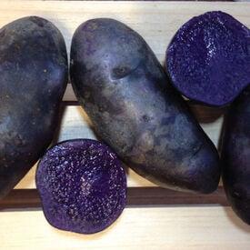 Magic Molly, Seed Potatoes