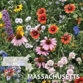Massachusetts Blend, Wildflower Seed