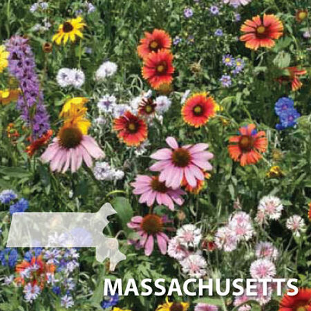 Massachusetts Blend, Wildflower Seed - 1 Ounce image number null