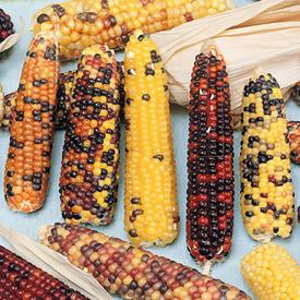 Wampum, Corn Seed