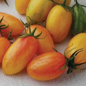Blush, Organic Tomato Seeds