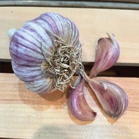 Bogatyr, Garlic Bulb