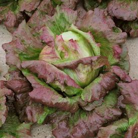 Chrystal Batavian, Lettuce Seeds