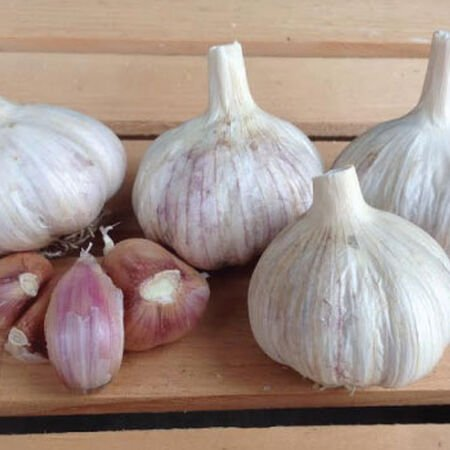Italian Red, Garlic Bulbs - 1/4 Pound image number null