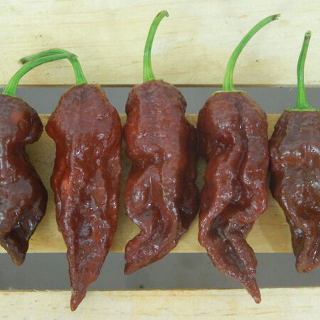 Chocolate Bhut Jolokia, Pepper Seeds - Packet image number null