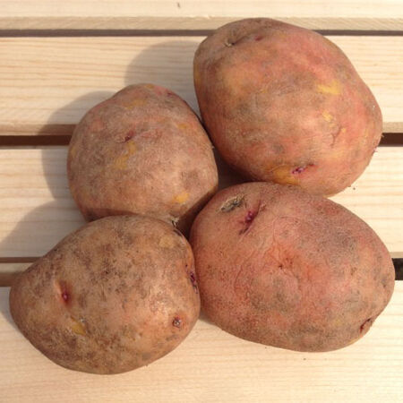 Red Gold, Seed Potatoes - 2 Pounds image number null