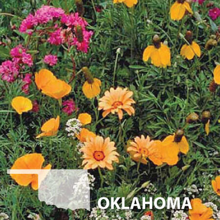 Oklahoma Blend, Wildflower Seed - 1 Ounce image number null