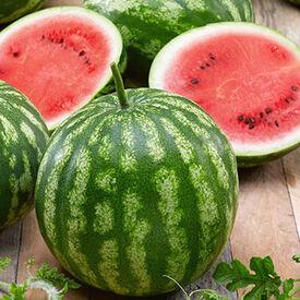 Cal Sweet Bush, (F1) Watermelon Seeds