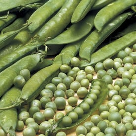 Lincoln, Pea Seeds