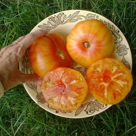 Pineapple, Tomato Seeds
