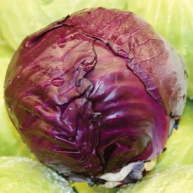 Red Express, Organic Cabbage Seeds