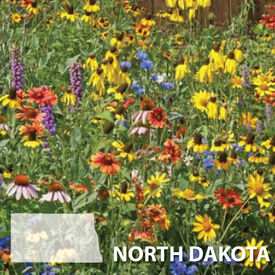 North Dakota Blend, Wildflower Seed