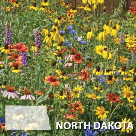 North Dakota Blend, Wildflower Seed - 1 Ounce image number null