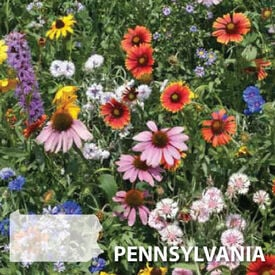 Pennsylvania Blend, Wildflower Seed
