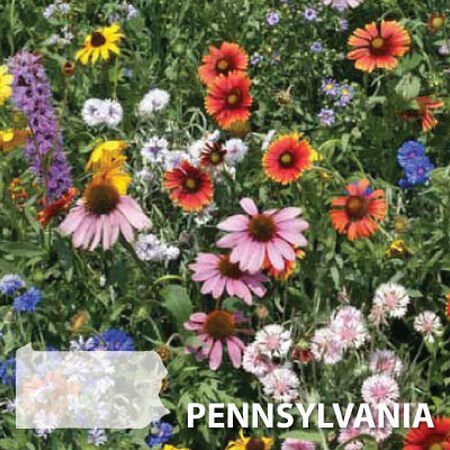 Pennsylvania Blend, Wildflower Seed - 1 Ounce image number null