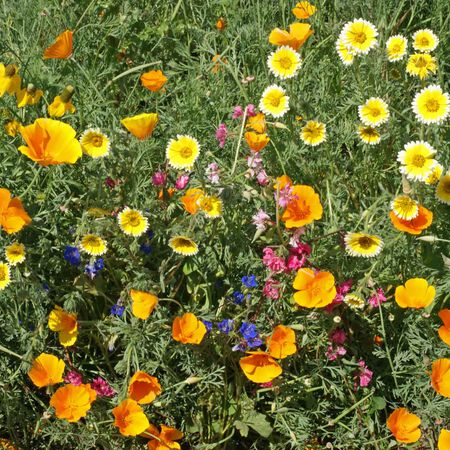 Southwest Native Blend, Wildflower Seed - 1 Ounce image number null