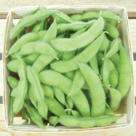 Midori Giant, Organic Edamame Seeds image number null