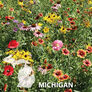 Michigan Blend, Wildflower Seed - 1 Ounce thumbnail number null