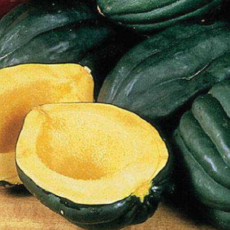 Table Queen Acorn, Squash Seeds - Packet image number null