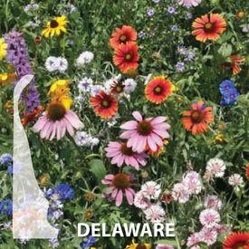 Delaware Blend, Wildflower Seed