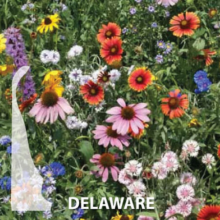 Delaware Blend, Wildflower Seed - 1 Ounce image number null