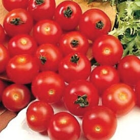 Large Red Cherry, Tomato Seeds