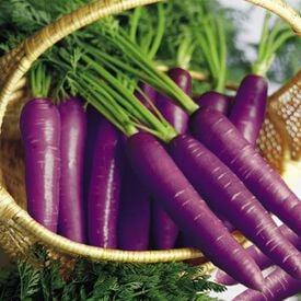 Cosmic Purple, Carrot Seeds