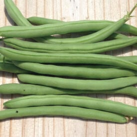 Topcrop, Bean Seeds