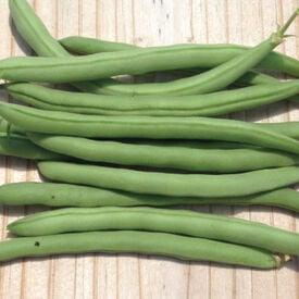 Topcrop, Bean Seeds