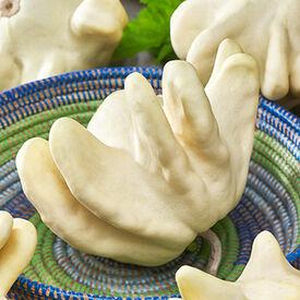 UFO, (F1) Gourd Seeds