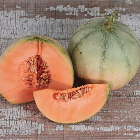 Charentais, Cantaloupe Seeds - Packet image number null