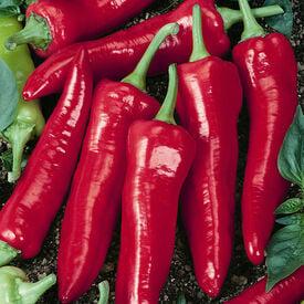 Big Jim, Organic Pepper Seeds